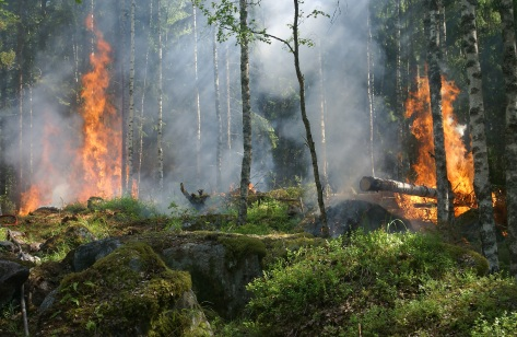 forest-fire-fire-smoke-conservation-51951.jpeg